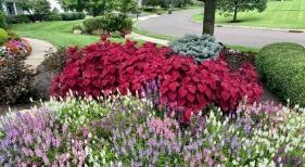1_Landscape-Flowers