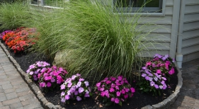 Ornamental-grasses1