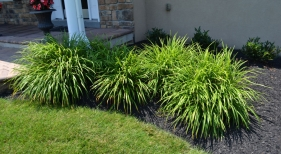 Ornamental-grasses2