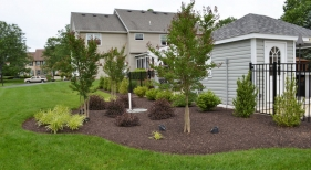 backyard-landscaping
