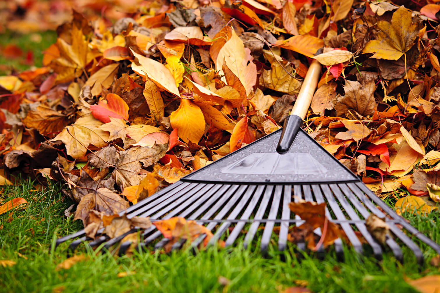 Simple Fall Lawn Care Tips